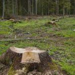伐採すること自体が問題ではない?森林伐採と温暖化との関係