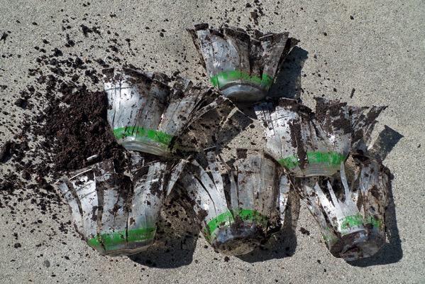 生分解可能なプラスチックが分解していない