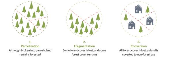 森林破壊の流れ
